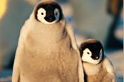 Sud America & Antartide Voyage