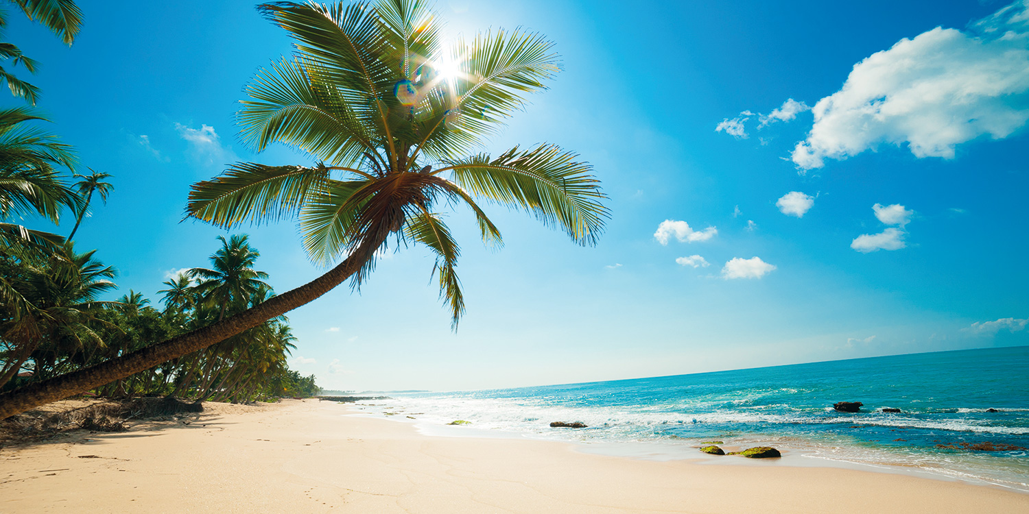 beach_palm_slider